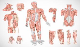 Atualização em Introdução ao Estudo da Anatomia Humana